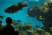 Kagoshima Aquarium -July 2009 a.jpg