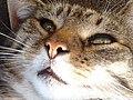 Kat - Katze - Cat - Chat - panoramio - Hänsel und Gretel (2).jpg