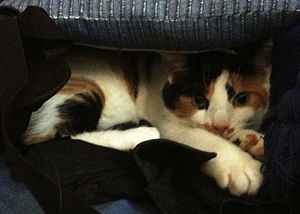 English: My cat (Kazu) built herself a fort! S...
