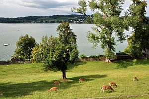 Rapperswil Castle - Deer Park on Lindenhof, Zürichsee and Kempraten in the background