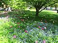 Keukenhof Garden (31).JPG