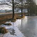 Kiebitzteich Bad Driburg Fischteich Acker.jpg