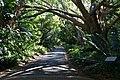 Kirstenbosch National Botanical Gardens - panoramio.jpg