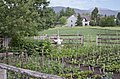 Kitchen garden and scarecrow - Tinsley Living Farm - Museum of the Rockies - 2013-07-08.jpg