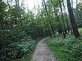 Kotelniki, Moscow Oblast, Russia - panoramio (117).jpg