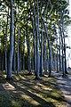 LSG Kühlung - Nienhäger Holz (Gespensterwald) (111).jpg