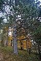 LSG Sudmerberg - Herbstwald (3).jpg