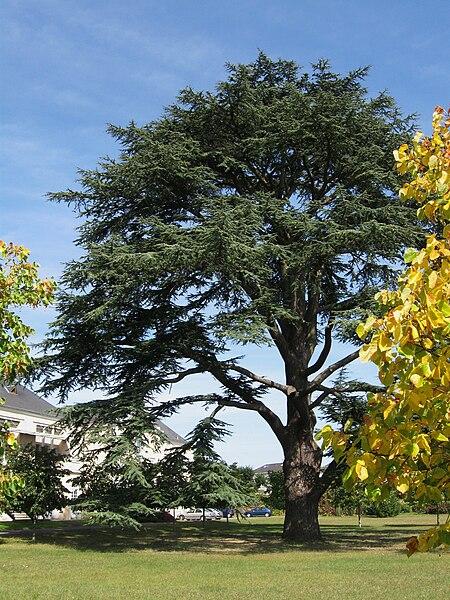 Résidence Paul Gauguin du Centre Hospitalier Régional d'Orléans, La Chapelle-Saint-Mesmin, Loiret, France