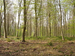 Image illustrative de l'article Forêt de Roumare
