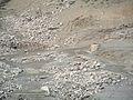 Lago Brugneto in periodo di siccità - panoramio (2).jpg