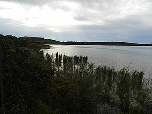 Laguna de Medina (1).JPG