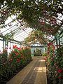 Laika ac Royal Greenhouses of Laeken (6317146794).jpg