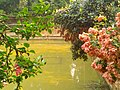 Lake's beauty- 2.jpg
