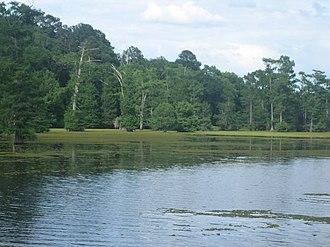Lake Bistineau - Lake Bistineau south of Doyline, Louisiana