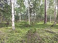 Landschap in Nationaal Park Sallandse Heuvelrug (3).jpg