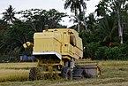 Langkawi Malaysia Rice-Harvesting-06.jpg
