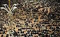 Laylat al-Qadr 19th Ramadan, Imam Reza shrine, Mashhad (8 8507210134 L600).jpg