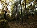 Leśna ścieżka - panoramio.jpg