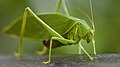 Leaf green (50408256813).jpg