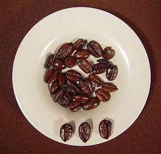 Kapeng barako - Liberica beans from Mindoro, Philippines