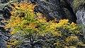 Liechtensteinklamm - Autumn trees (15587496556).jpg
