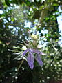 Light purple flower floresta.jpg