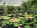 Lily House, Kew Gardens.jpg