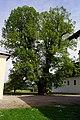 Linde in Zellhof am Grabensee 1.JPG