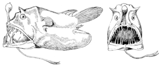 Leftvent Family of fishes