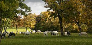Lipica horses (7198987762)