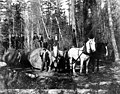 Loggers with a team of horses between Bangor and Port Gamble, nd (INDOCC 170).jpg