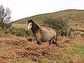 Lone wild horse on the hillside (Unsplash).jpg