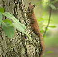 Look from the tree (28580153420).jpg