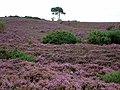 Looking North Up Vales Moor - geograph.org.uk - 528899.jpg