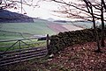 Looking towards Touting Birks Hill from the Southern Upland Way - geograph.org.uk - 65127.jpg