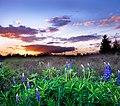 Loopins at Sunset - Flickr - SFB579 Namaste.jpg