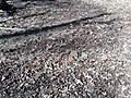 Loose bricks lying on the ground at Lexington.jpg
