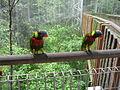 Lories, Jurong BirdPark.JPG