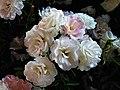 Love and Roses กุหลาบกับความรัก (13).jpg