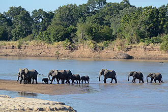 Eastern Province, Zambia - Elephants in South Luangwa National Park