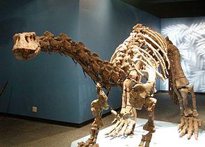 Skelettrekonstruktion von Lufengosaurus magnus im Naturhistorischen Museum Peking