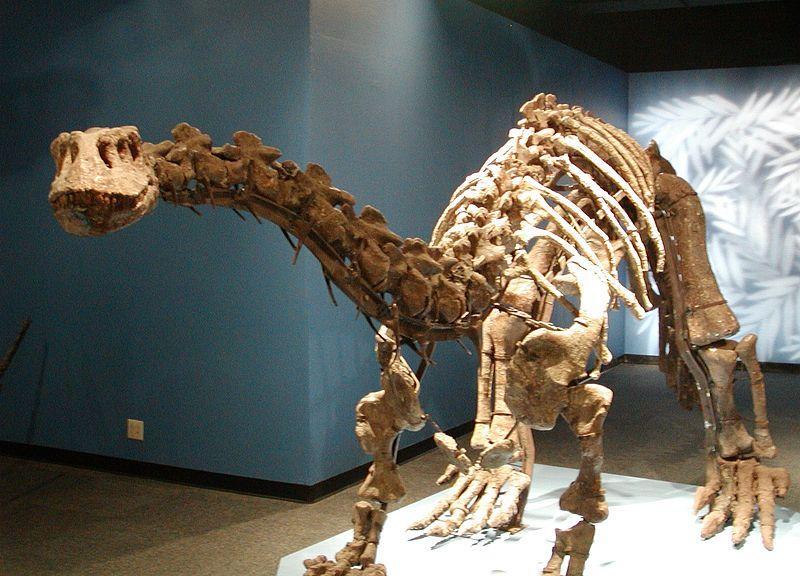 Lufengosaurus - Simple English Wikipedia, the free ...
