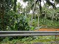 Luisian,Lucbanjf9038 10.JPG