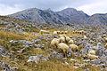 Lumbardhs second Meadows.jpg