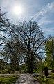 Münster, Park Sentmaring, Naturdenkmal -- 2015 -- 5649.jpg