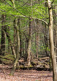 Münster, Wolbeck, Wolbecker Tiergarten, Naturwaldzelle -Teppes Viertel- -- 2014 -- 7097.jpg