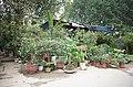 Một cửa hàng bán cây cảnh trên đường ven hồ sau đường Thống Nhất, gần ngã tư đường Thống Nhất giao với đường Lê Thánh Tông, thành phố Hải Dương, tỉnh Hải Dương.jpg