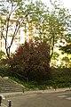 MADRID A.V.U. JARDIN PLAZA PEÑUELAS - panoramio (5).jpg