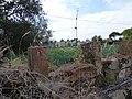 MAZZORBO - Vineyards.jpg
