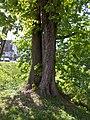 MH-ND10-Kastanie Kluse Park Stamm.jpg